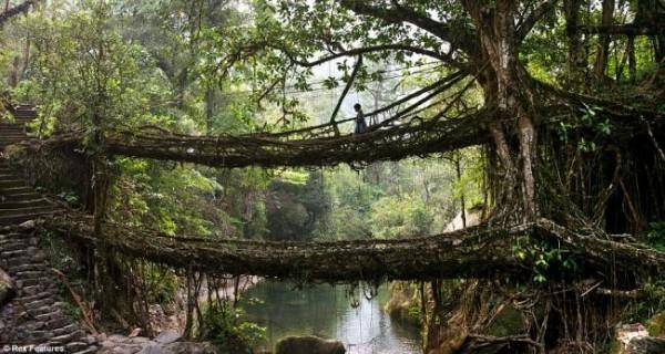 висячий мост из лиан
